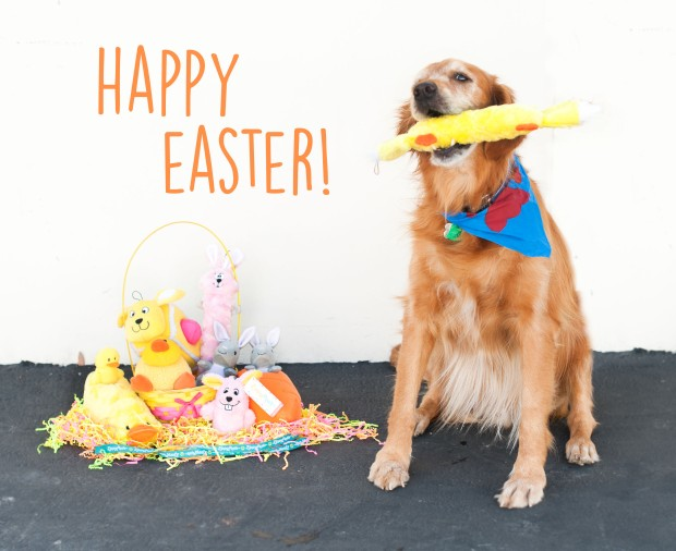 ZippyPaws Happy Easter