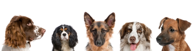Variety-of-Dogs