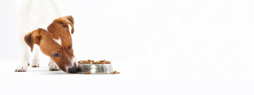 Food-Banner
