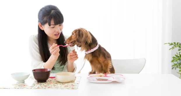 Should-Your-Dog-Eat-People-Food-3