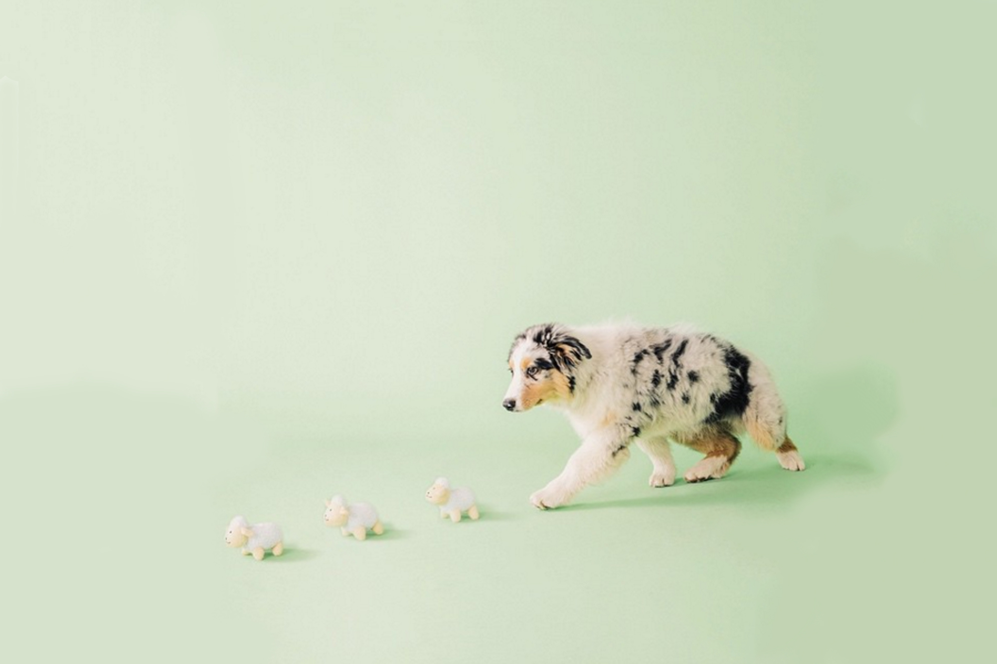dog toys – ZippyPaws
